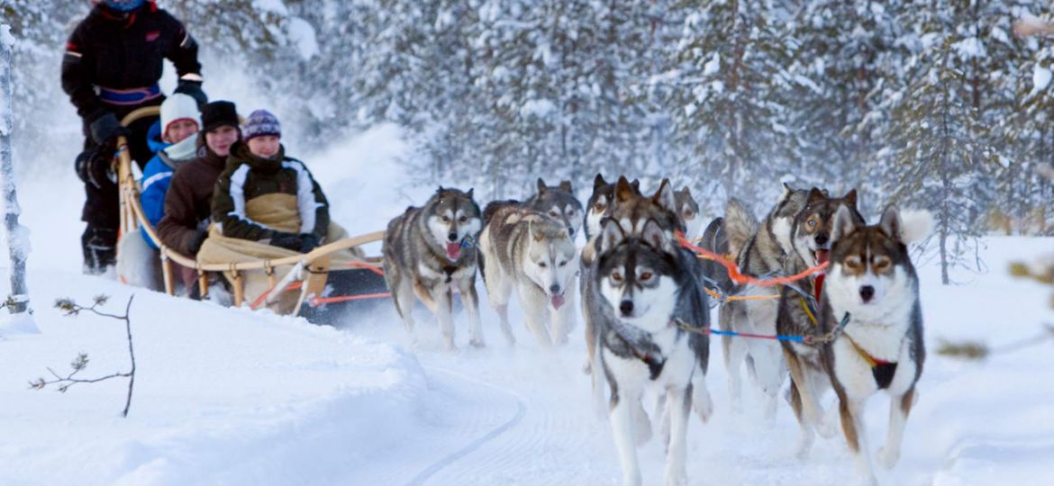 husky-sleigh-ride-alps