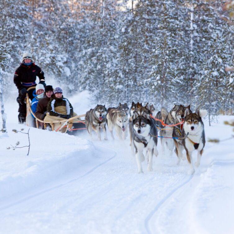 husky-sleigh-ride-alps